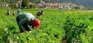 braccianti-agricoltura