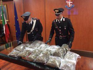 Droga: carabinieri Cosenza sequestrano 13 chili di marijuana