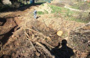 Controlli del Corpo forestale tagli boschivi a Rende