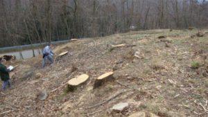 Taglio abusivo alberi