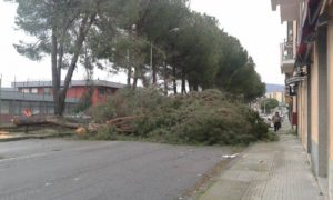 cosenza_alberi_caduti_in_via_degli_stadi