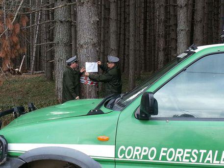 """Operazione """"Napea"""" Corpo forestale a Bocchigliero"""