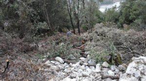 Tagliate abusivamente piante di leccio nel Parco del Pollino