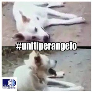 oipa_sezione_cosenza_uniti_per_angelo