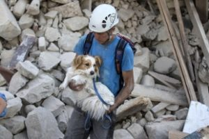 Dopo il sisma arriva anche l'ambulanza per gli animali. Tre gattini subito recuperati, saranno dati in adozione