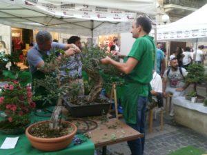 cosenza_mostra_bonsai